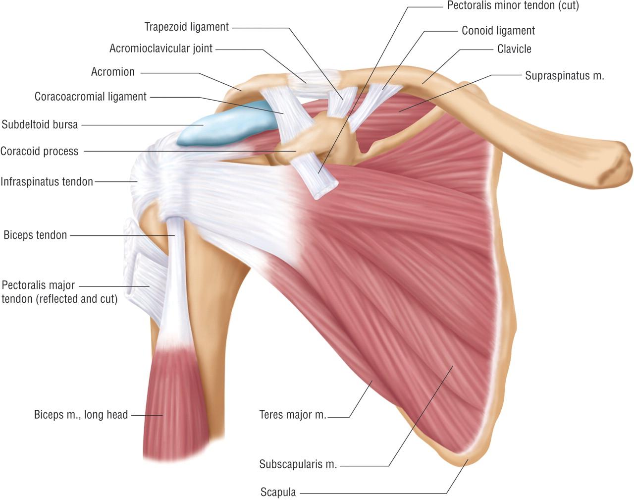 Shoulder Problems? | Kinesis Chiropractic