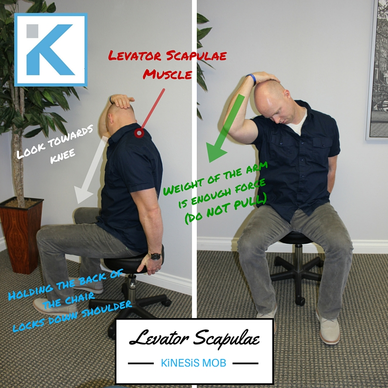 Levator Scap Chair