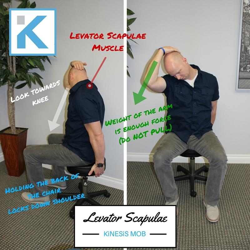 Levator Scap Chair